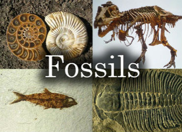 Fossils Song